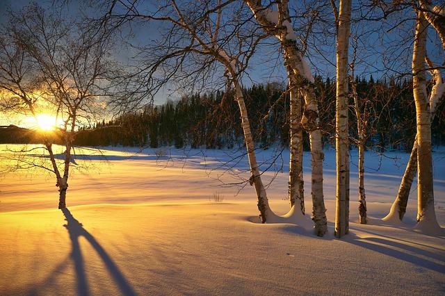 březový háj pod sněhem